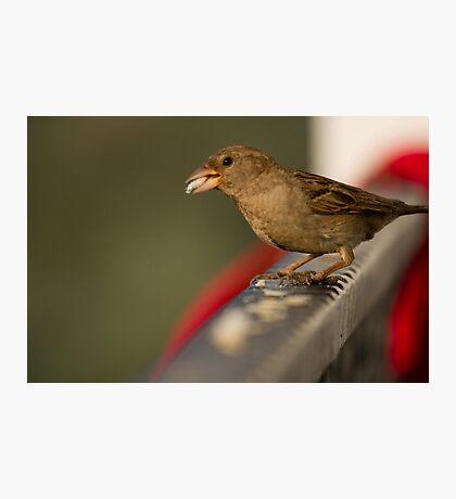 Bird eating Photographic Print