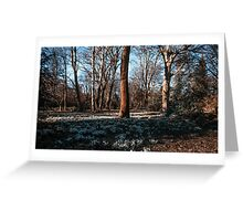 Snowdrops In a New Spring Greeting Card