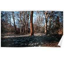 Snowdrops In a New Spring Poster
