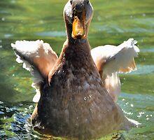 Duck  by Savannah Gibbs