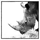 Rhino by Wendi Donaldson