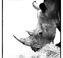 Rhino by Wendi Donaldson Laird