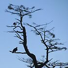 Bald eagles Oregon coast by Hannah Fenton-Williams