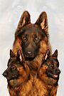 Long Coated German Shepherd Collage by Sandy Keeton