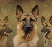Sable German Shepherd Dog Collage by Sandy Keeton