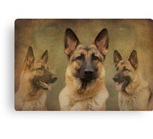 Sable German Shepherd Dog Collage Canvas Print