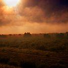 Sunburst by Phil Campus