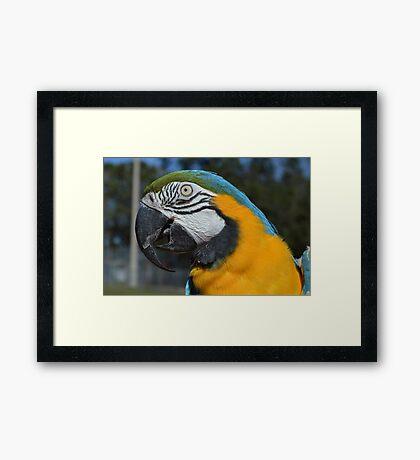 Paco Closeup 1 Framed Print