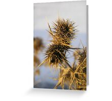 Wild Teasel Seed Greeting Card