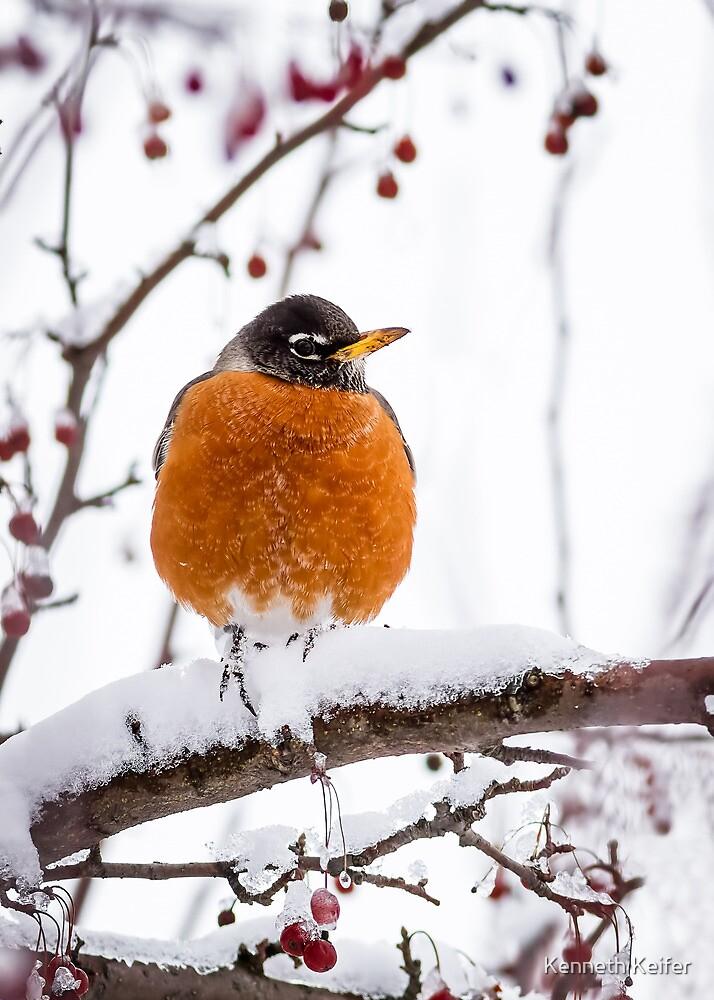 Cold Feet - Robin on a Snowy Branch by Kenneth Keifer