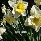 HE IS RISEN/DAFFODILS by Shoshonan