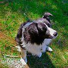 Joey-The Dog by 1234LiamFaris12