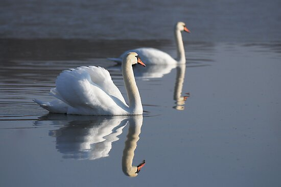 Swan Lake by Heather Thorsen