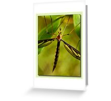Mosquito 01 Greeting Card