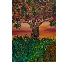 Bottle Brush Tree at sunset Photographic Print