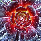 Succulent Aeonium by Wayne Gerard Trotman