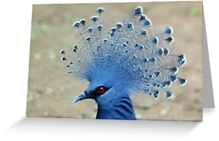 Victoria Crowned Pigeon (Goura victoria) by DutchLumix