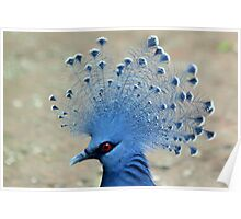 Victoria Crowned Pigeon (Goura victoria) Poster