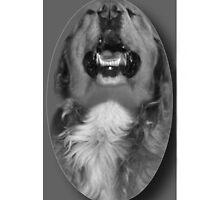 LAUGHING DOG IPHONE CASE by ✿✿ Bonita ✿✿ ђєℓℓσ