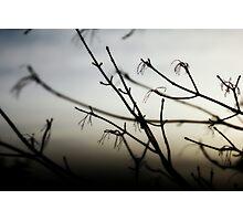 remembering~ Photographic Print