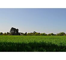 Green Field Photographic Print