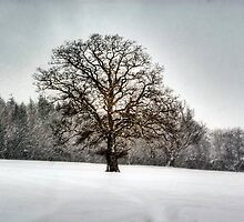 Mighty Oak in a Snow storm by gardencottage