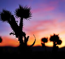 grasshopper sunset by drowningannie
