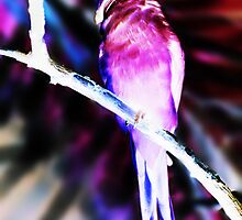 inverted bird of paradise by drowningannie