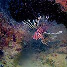 Lion Fish on The Reef by Randy Sprout