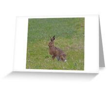 Lancashire: Mad March Hare Greeting Card