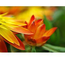 Orange Flower in the Evening Sun Photographic Print