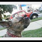 French Pug by jollykangaroo
