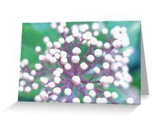 Flower 1 Macro Greeting Card