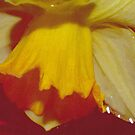 Yellow Daffodils 1 by Robbie Patterson