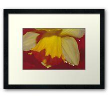 Yellow Daffodils 1 Framed Print