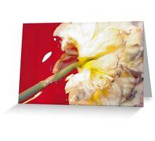 Yellow Daffodil In Water 1 Greeting Card