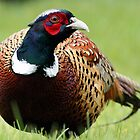 March of the Pheasant by Simon Brown