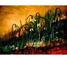The Rapture of Life... Photographic Print