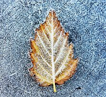 Frosty leaf by Paul Duncan