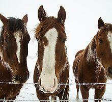 Horses by Justin Atkins