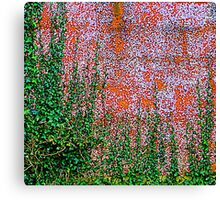 Ivy And Pebble Dash 1 Canvas Print