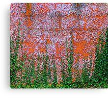 Ivy And Pebble Dash 2 Canvas Print
