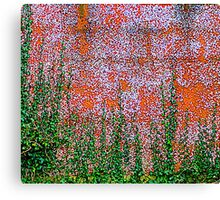 Ivy And Pebble Dash 3 Canvas Print