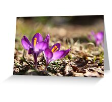 Touch Of Springtime Greeting Card