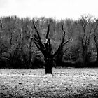 Burned Out Tree by Thliii