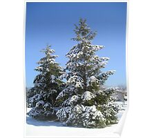 Pine Trees in Winter Snow Poster