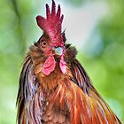 Big Rooster by Kathy Baccari