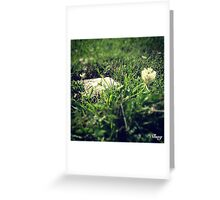 A Single Flower Greeting Card