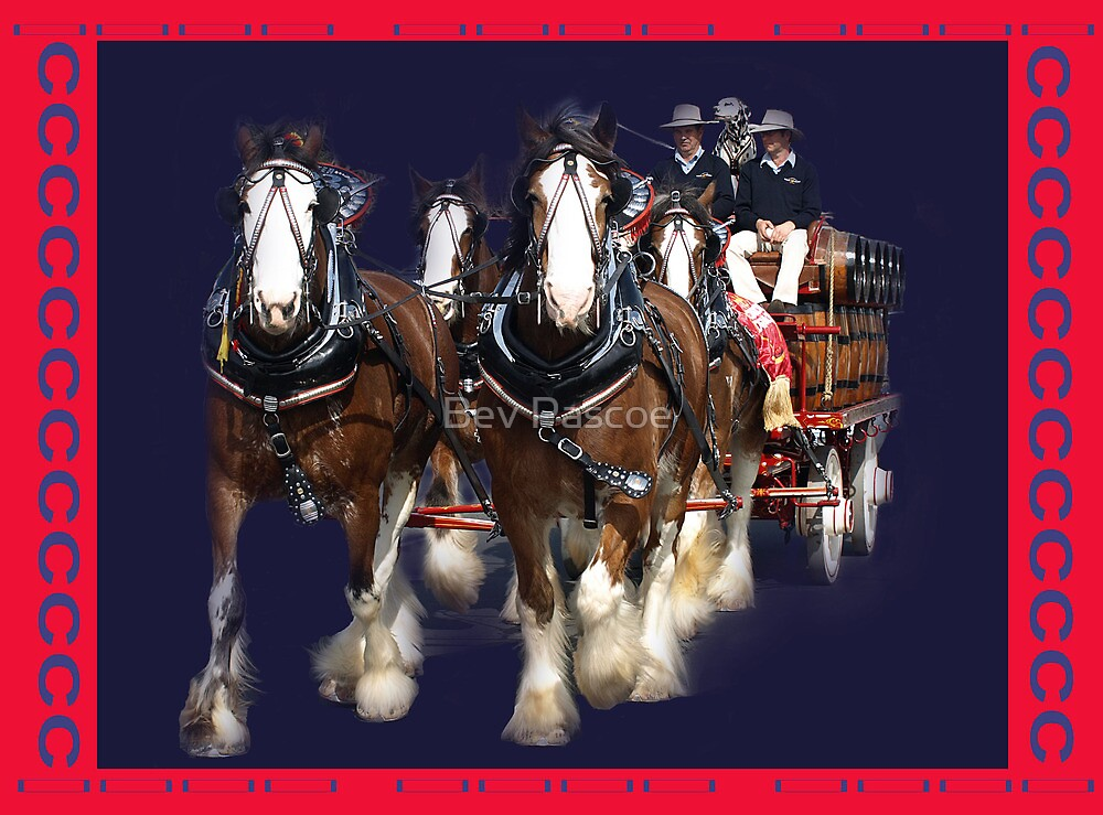 CUB Clydesdale Team in Warragul by Bev Pascoe