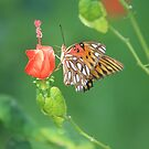 Butterfly Landing by Bob Hardy